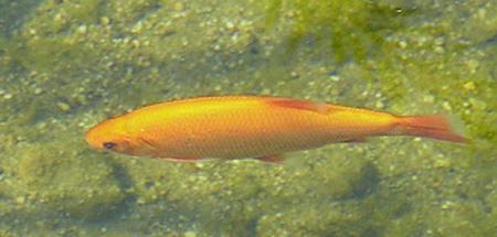 Unsere teichfische im klaren wasser teich filter for Fische gartenteich geeignet