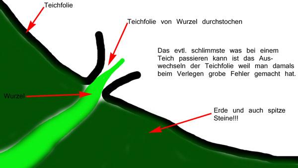 Teichfolie Richtig Verlegen Teich Filter